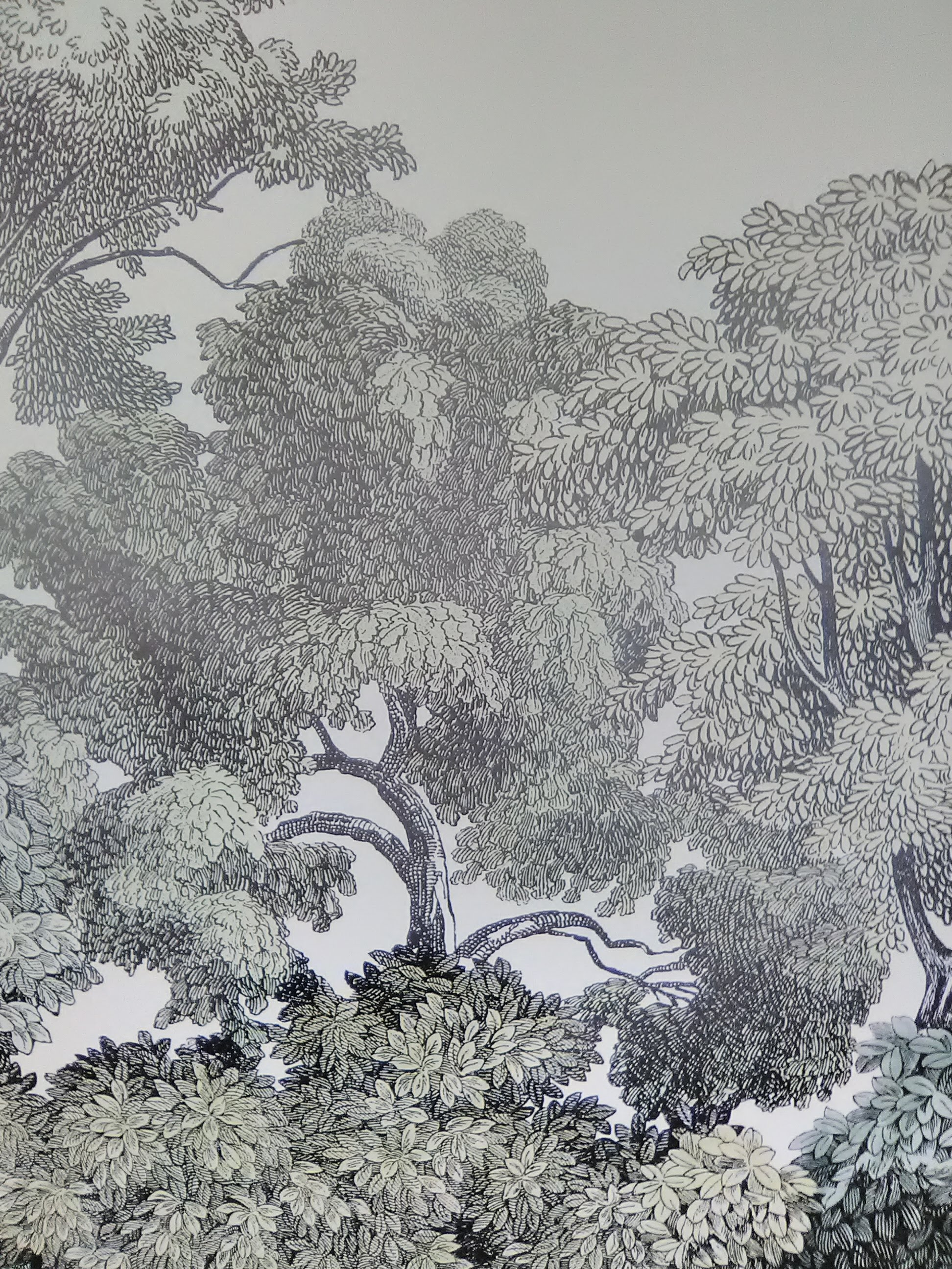 Wallpaper - Mural - Etched Forest Close Up